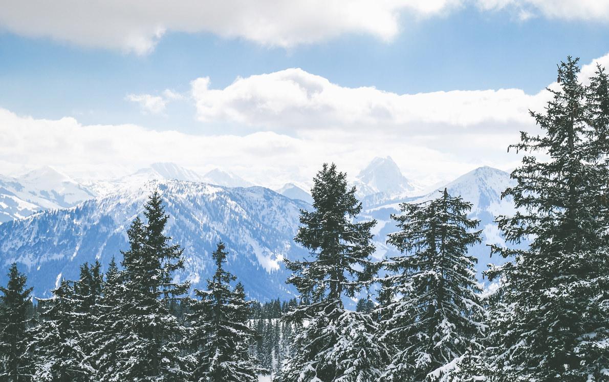 ellmau-mountain-trees austria