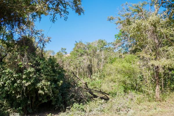 djungle guanacaste costa rica