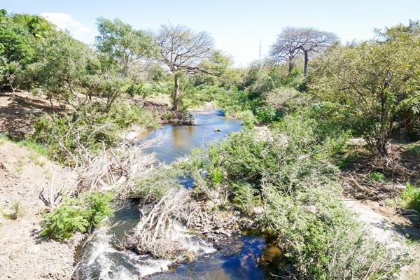 djungle and river guanacaste costa rica